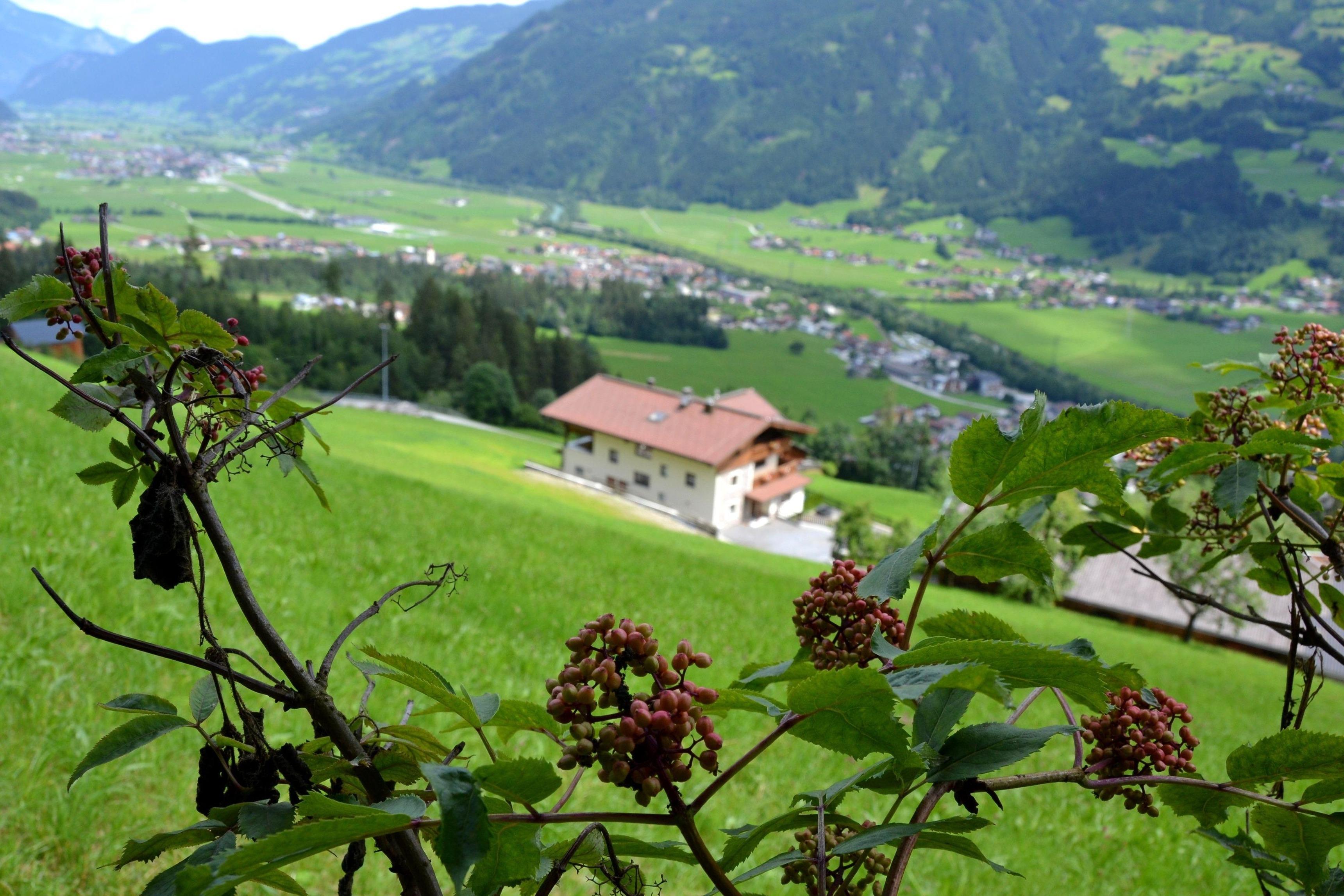 Holiday apartment Chaletapartment Bergmahd (1859206), Kaltenbach, Zillertal, Tyrol, Austria, picture 11