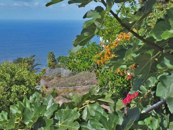 Appartement de vacances mit Meerblick - F0102 (2211492), El Sauzal, Ténérife, Iles Canaries, Espagne, image 18