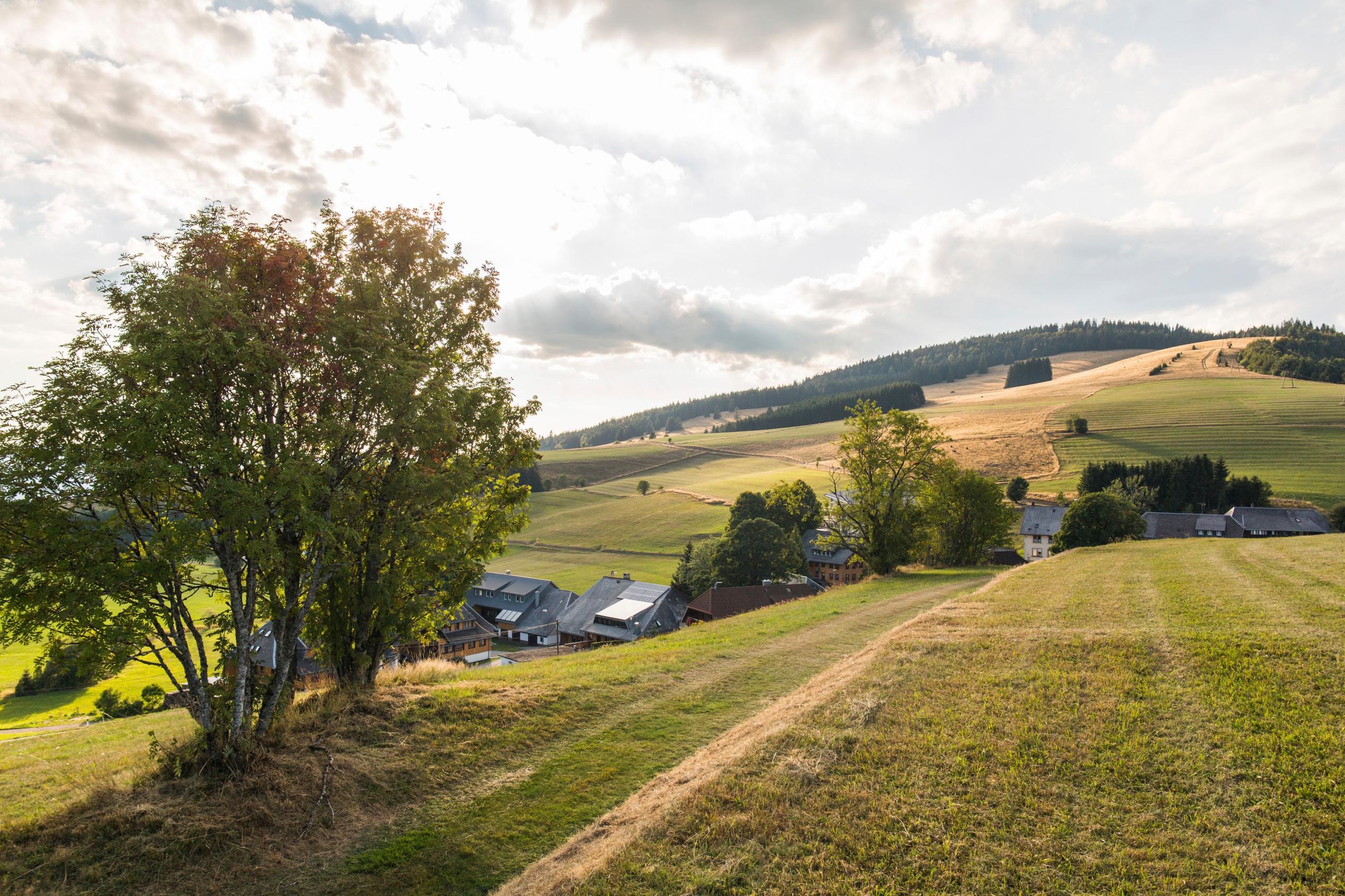 Ferienwohnung Fewo Waldblick- hübsche neu renovierte Fewo- Schwarzwald - Todtnau, Liftverbund Feldberg (2641721), Herrenschwand, Schwarzwald, Baden-Württemberg, Deutschland, Bild 11