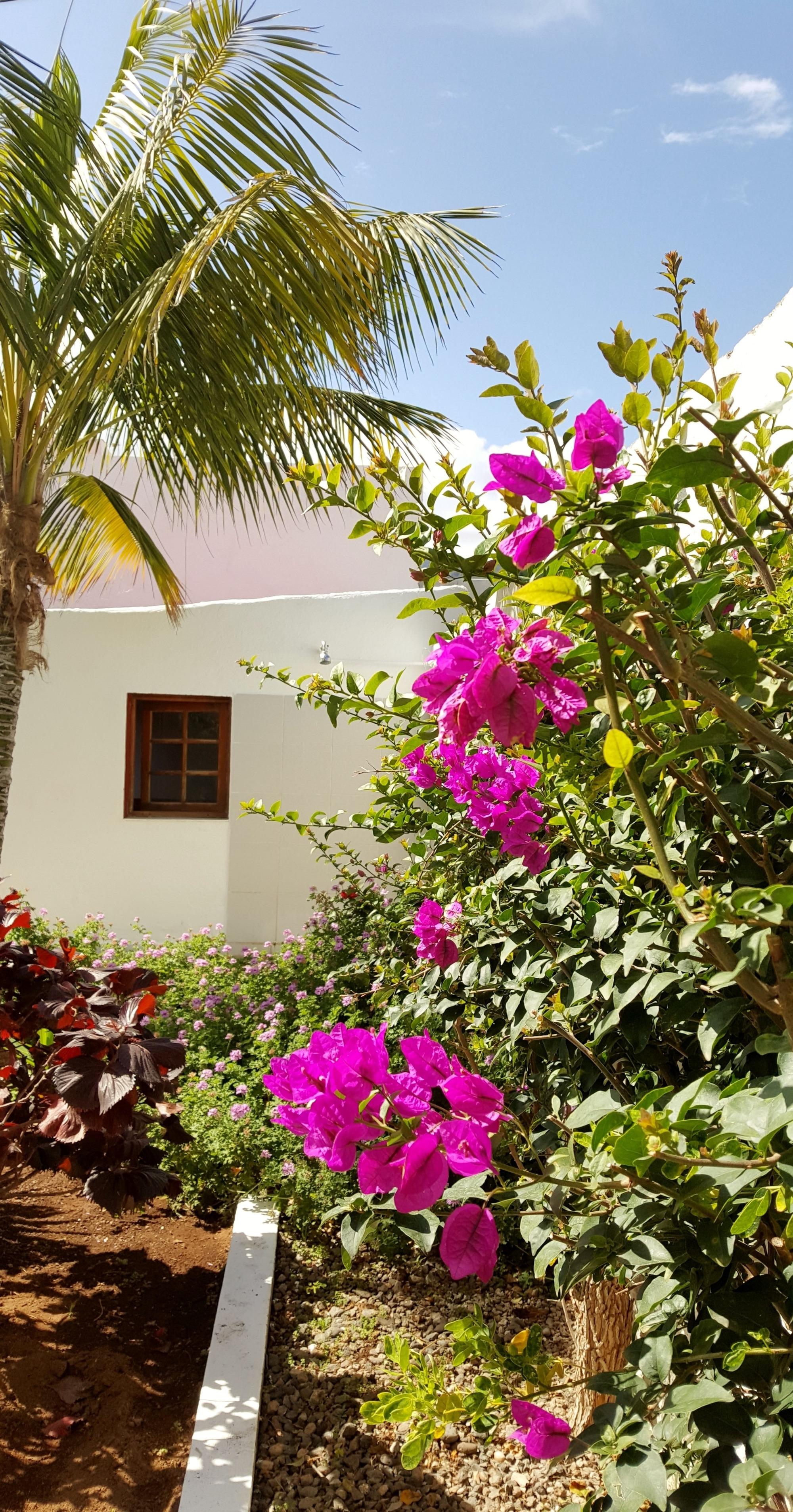 Maison de vacances Casa Chiara (2463888), La Costa, Ténérife, Iles Canaries, Espagne, image 17