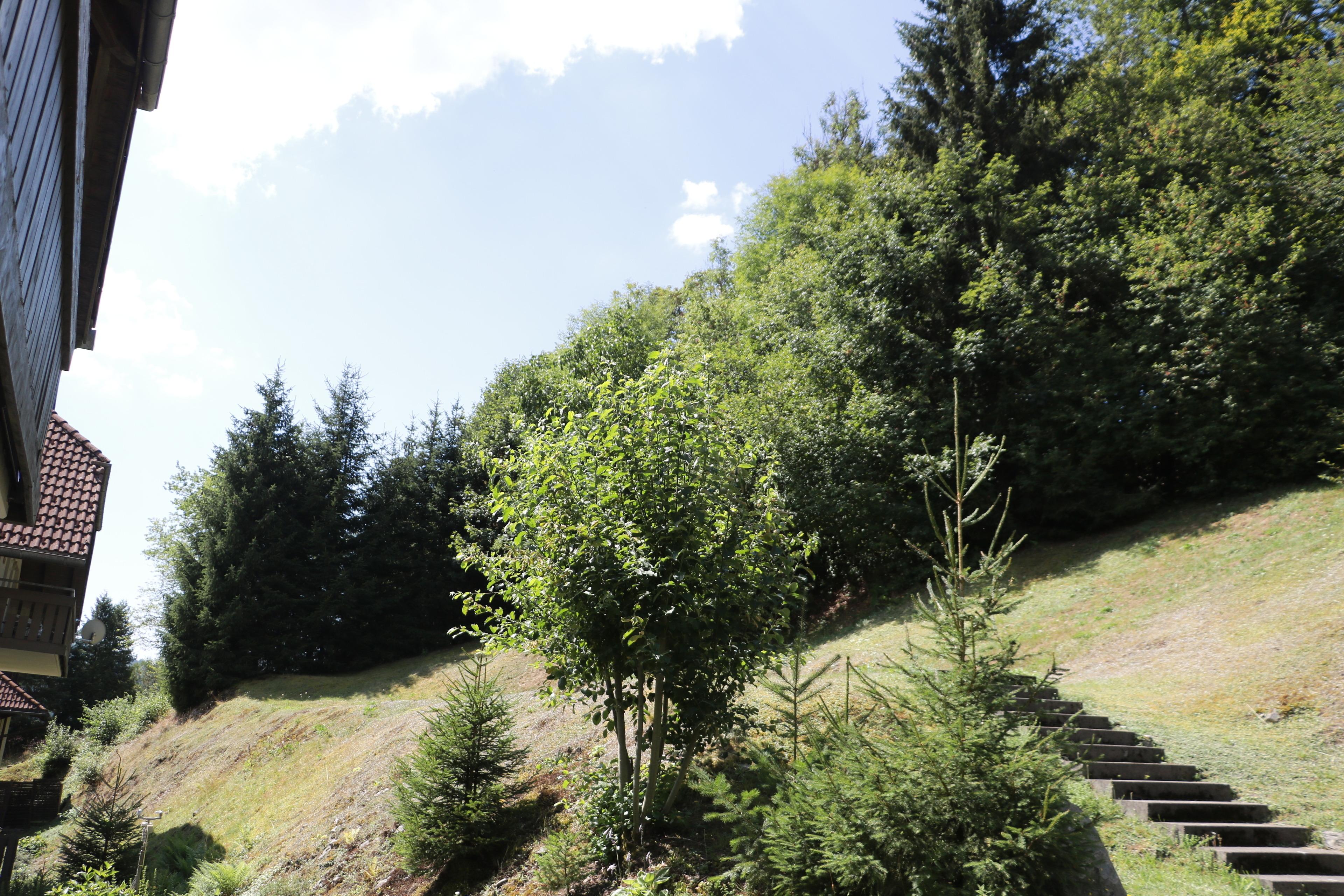 Ferienwohnung Kupferkanne - Fewo Wand  Nr 21 - Todtmoos, Liftverbund Feldberg (2641734), Todtmoos, Schwarzwald, Baden-Württemberg, Deutschland, Bild 13