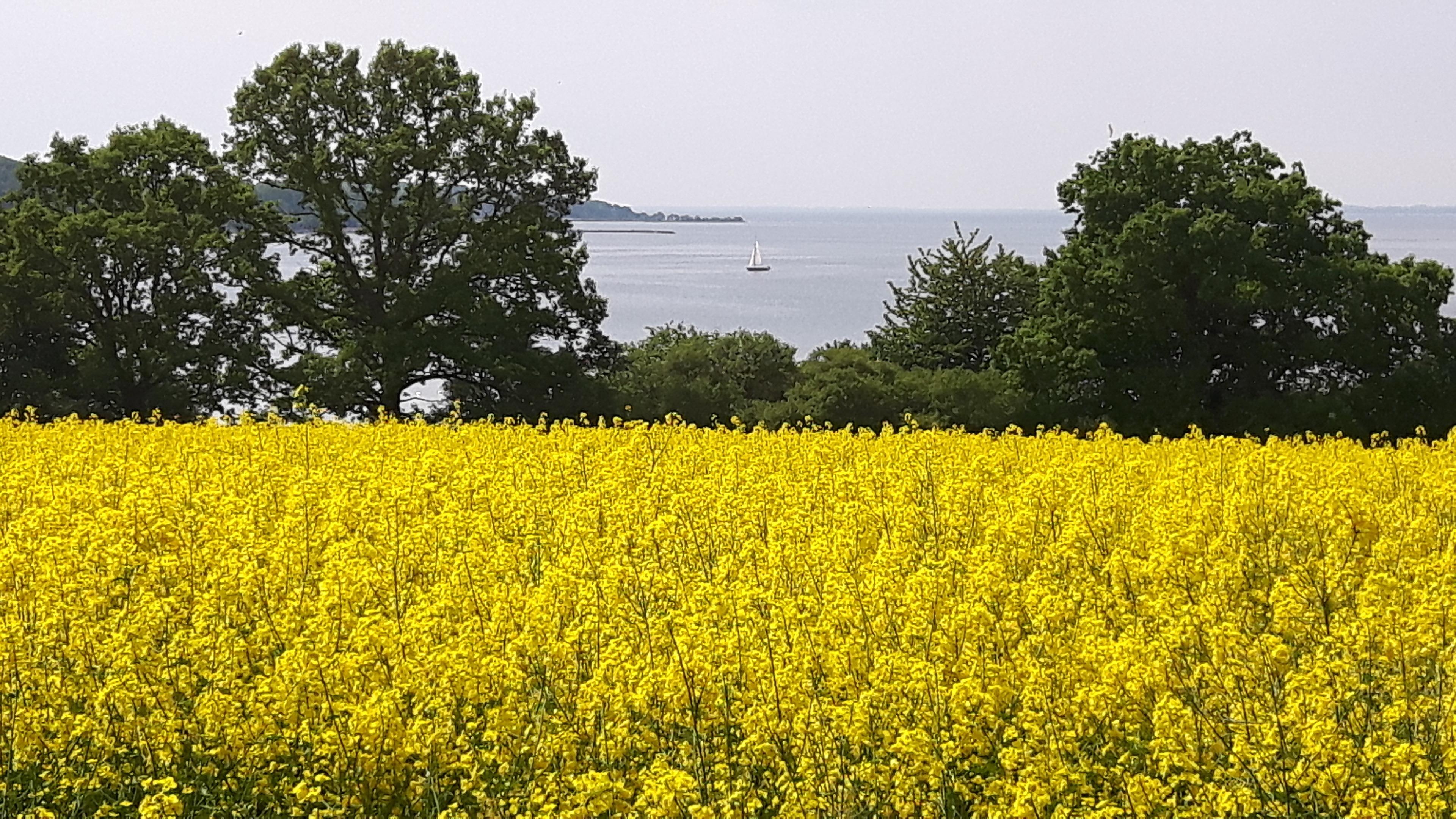 Ferienwohnung Dünenhaus mit Meerblick, Schwimmbadnutzung inklusive (2568191), Göhren, Rügen, Mecklenburg-Vorpommern, Deutschland, Bild 20