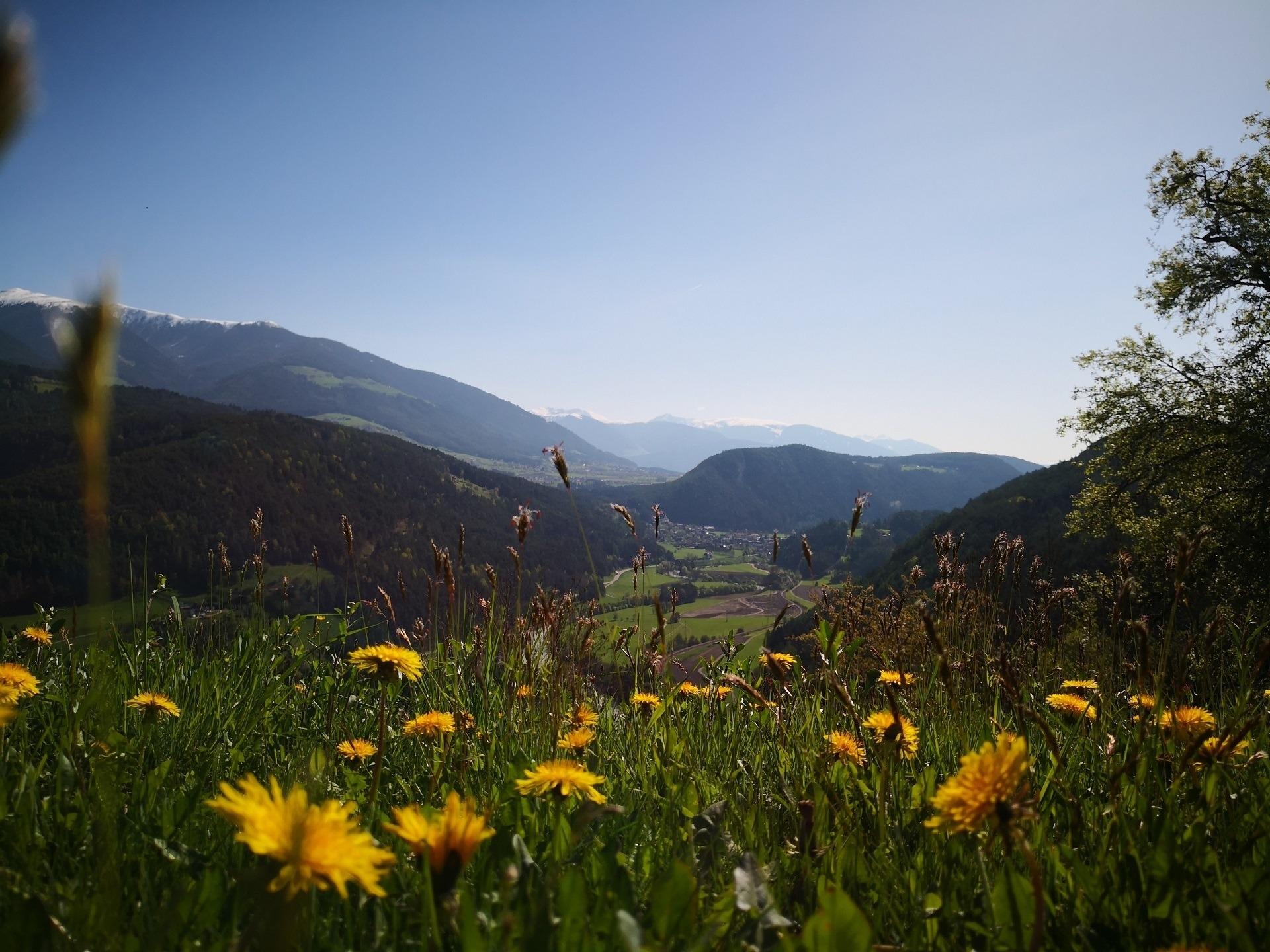 Ferienwohnung Oberplunerhof Chaletapartment Gitschberg (2701876), Kiens (Chienes), Pustertal, Trentino-Südtirol, Italien, Bild 8